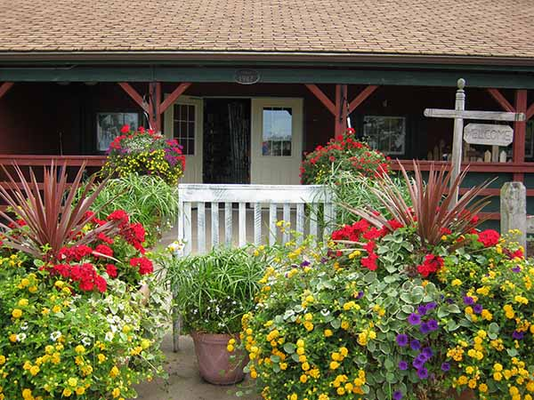 Click Here to See Our Annuals