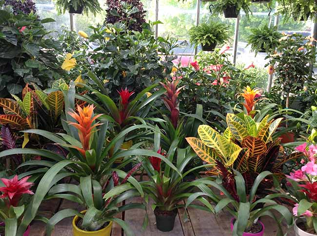 Click Here to See More Houseplants