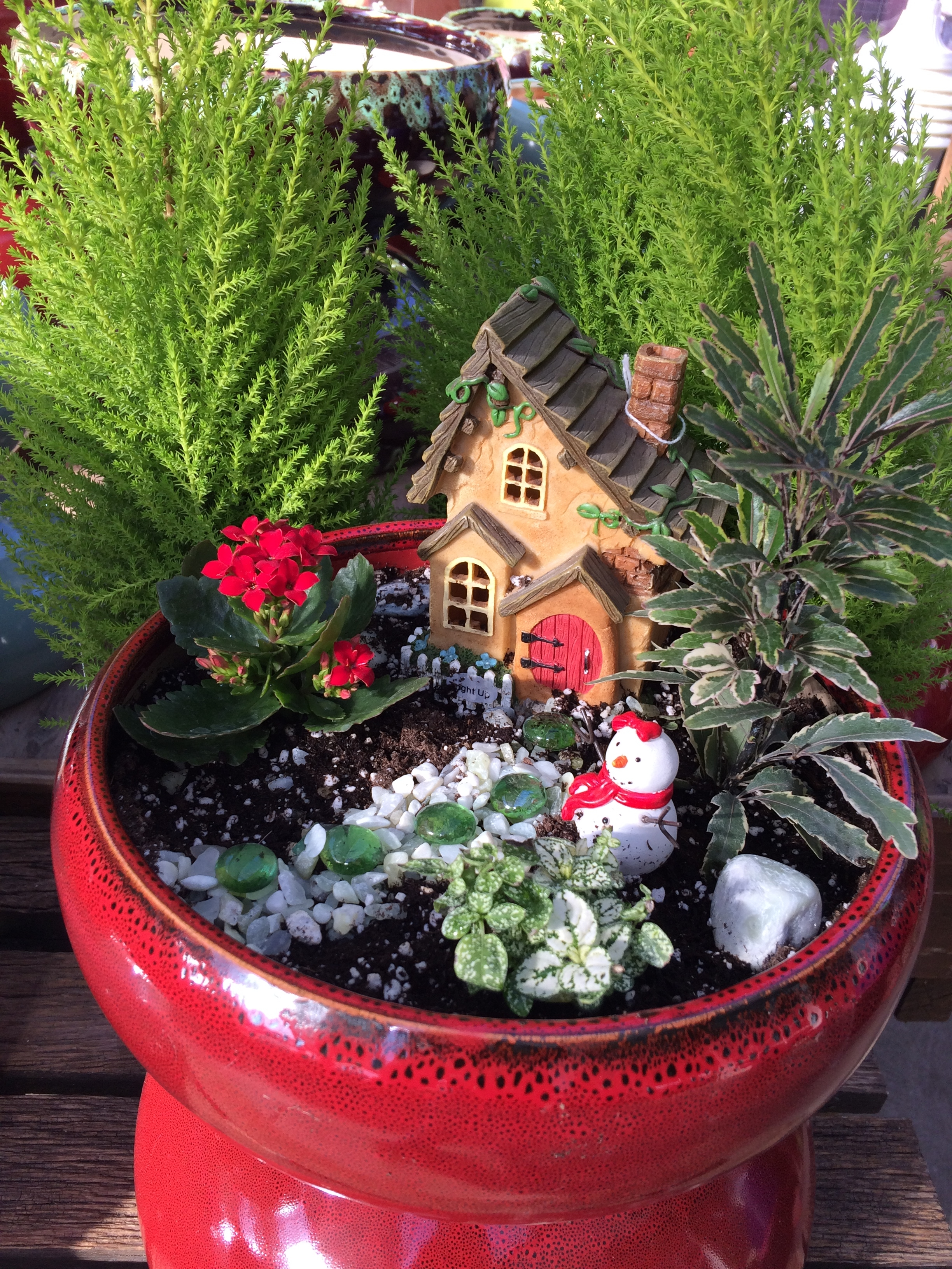 winter fairy garden boyert u0027s greenhouse u0026 farm